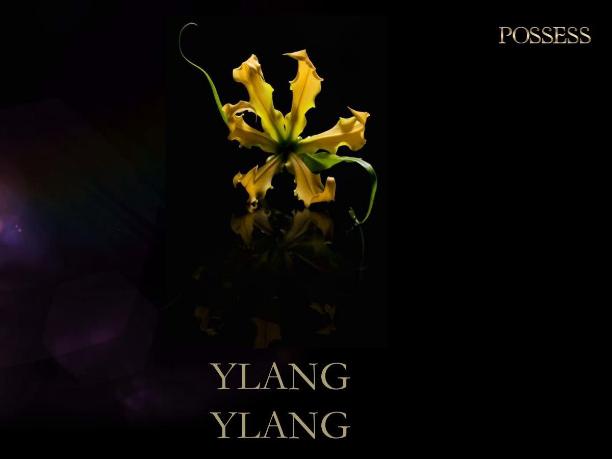 Possess  kwiat Ylang Ylang